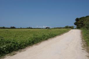片側に草原のある未舗装の白い一本道の写真素材 [FYI02975975]