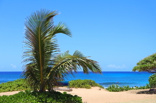 ハワイ オアフ島の青空とターコイズブルーの海の写真素材 [FYI02975986]