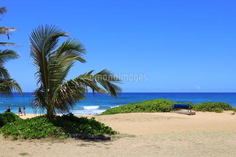 ハワイ オアフ島の青空とターコイズブルーの海の写真素材 [FYI02975988]