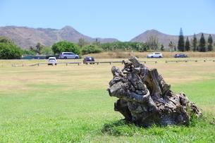 ハワイ オアフ島の青空と自然の風景の写真素材 [FYI02975990]