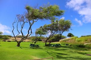 ハワイ オアフ島の青空と自然の風景の写真素材 [FYI02975992]