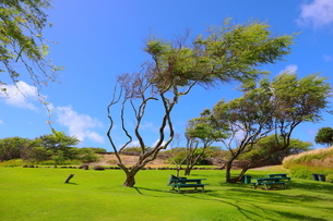 ハワイ オアフ島の青空と自然の風景の写真素材 [FYI02975993]