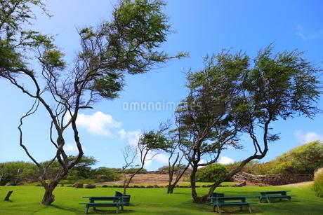 ハワイ オアフ島の青空と自然の風景の写真素材 [FYI02975994]