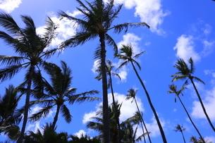 ハワイ オアフ島の青空とヤシの木の写真素材 [FYI02975997]