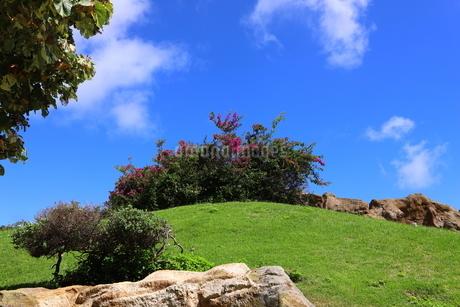 ハワイ オアフ島の青空と自然の風景の写真素材 [FYI02975998]