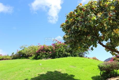 ハワイ オアフ島の青空と自然の風景の写真素材 [FYI02975999]
