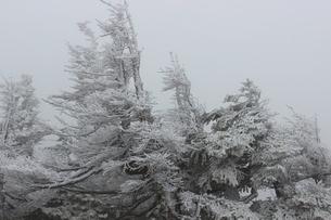 初冬の八甲田の写真素材 [FYI02976017]