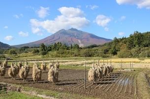 収穫の秋の写真素材 [FYI02976018]