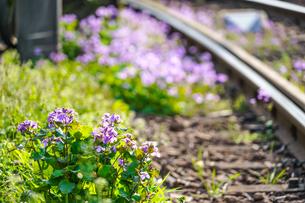 都電荒川線の線路と花2の写真素材 [FYI02976127]