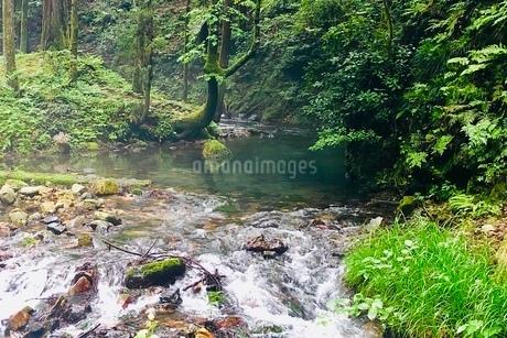 醒井峡谷の写真素材 [FYI02976198]