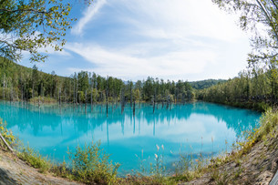 夏の青い池 美瑛町の写真素材 [FYI02976205]