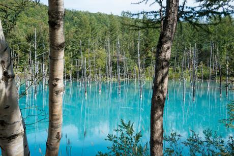 夏の青い池 美瑛町の写真素材 [FYI02976207]
