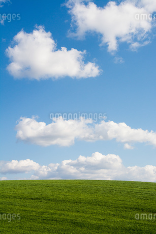 緑の草原と青空の写真素材 [FYI02976208]