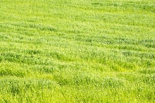 緑の草原の写真素材 [FYI02976210]