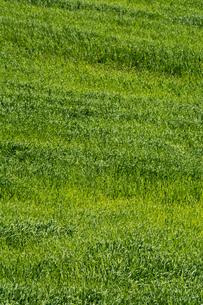 緑の草原の写真素材 [FYI02976211]