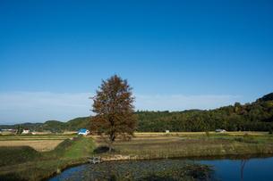 沼のほとりに立つ赤い実をつけたナナカマドの写真素材 [FYI02976213]