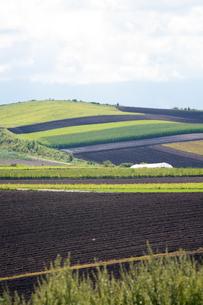 パッチワークのような秋の畑作地帯の写真素材 [FYI02976214]