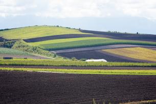 パッチワークのような秋の畑作地帯の写真素材 [FYI02976225]