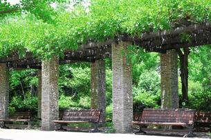 初夏の緑豊かな公園のベンチの写真素材 [FYI02976479]