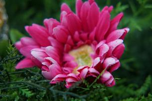 造花と庭のイメージの写真素材 [FYI02976636]