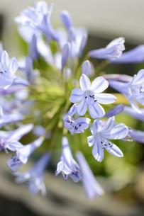 紫色の可愛い花が咲いているの写真素材 [FYI02976697]