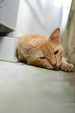 路地裏でのんびり寝ている猫の写真素材 [FYI02976699]