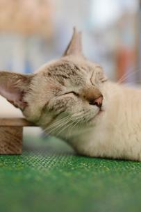 路地裏でのんびり寝ている猫の写真素材 [FYI02976700]