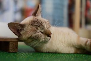 路地裏でのんびり寝ている猫の写真素材 [FYI02976701]