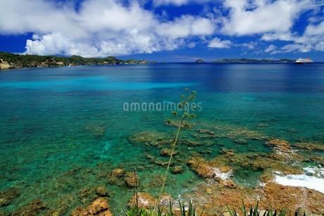 母島の御幸之浜の写真素材 [FYI02976818]