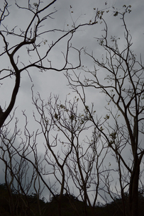 段々と枯れてきている木々の写真素材 [FYI02976831]