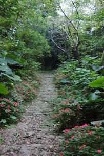森に続く道の両側に赤い花が咲いているの写真素材 [FYI02976869]
