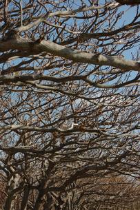 枯れた木々が並んでいるの写真素材 [FYI02976873]
