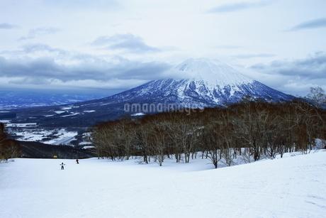 ニセコヒラフスキー場冬景色の写真素材 [FYI02977134]