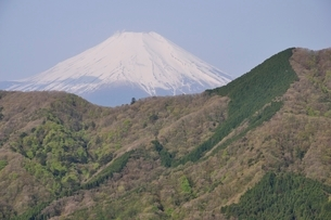 加入道山からの富士山の写真素材 [FYI02977282]
