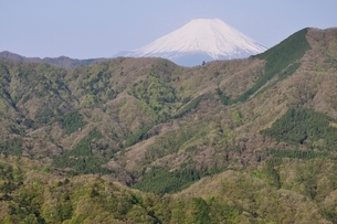 加入道山からの富士山の写真素材 [FYI02977283]