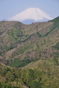 加入道山からの富士山の写真素材 [FYI02977285]