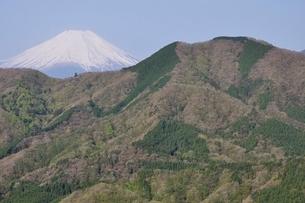 加入道山からの富士山の写真素材 [FYI02977287]