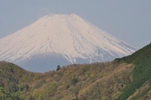 加入道山からの富士山の写真素材 [FYI02977289]