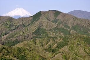 春の鳥ノ胸山と富士山の写真素材 [FYI02977291]