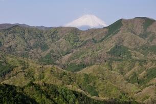 加入道山からの富士山の写真素材 [FYI02977292]