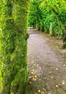 新緑の公園 散歩道の写真素材 [FYI02977386]