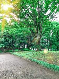 新緑の公園の写真素材 [FYI02977387]
