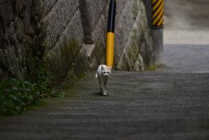 路地裏の猫の写真素材 [FYI02977522]