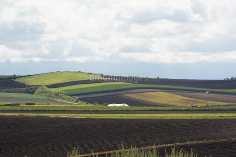 パッチワークのような畑作地帯 旭川市の写真素材 [FYI02977633]