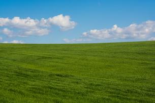 緑の草原と青空の写真素材 [FYI02977644]