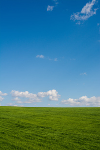 緑の草原と青空の写真素材 [FYI02977645]
