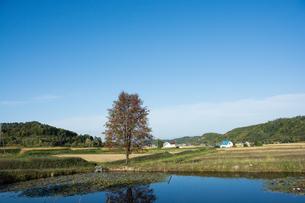 池の畔に立つ赤い実をつけたナナカマドの写真素材 [FYI02977647]