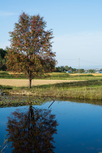 池の畔に立つ赤い実をつけたナナカマドの写真素材 [FYI02977649]