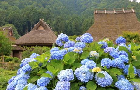 初夏の美山かやぶきの里の写真素材 [FYI02977791]