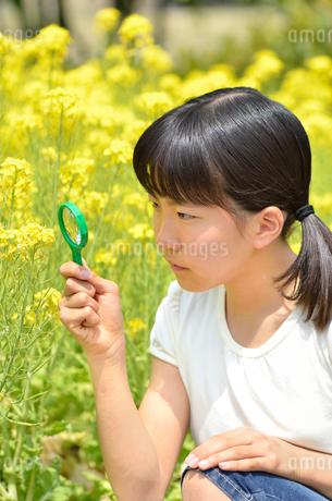 虫眼鏡で花を観察する女の子の写真素材 [FYI02977823]